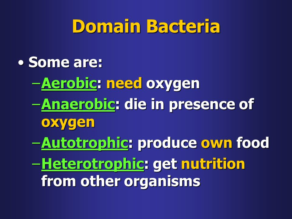 Domain Bacteria Some are: Aerobic: need oxygen