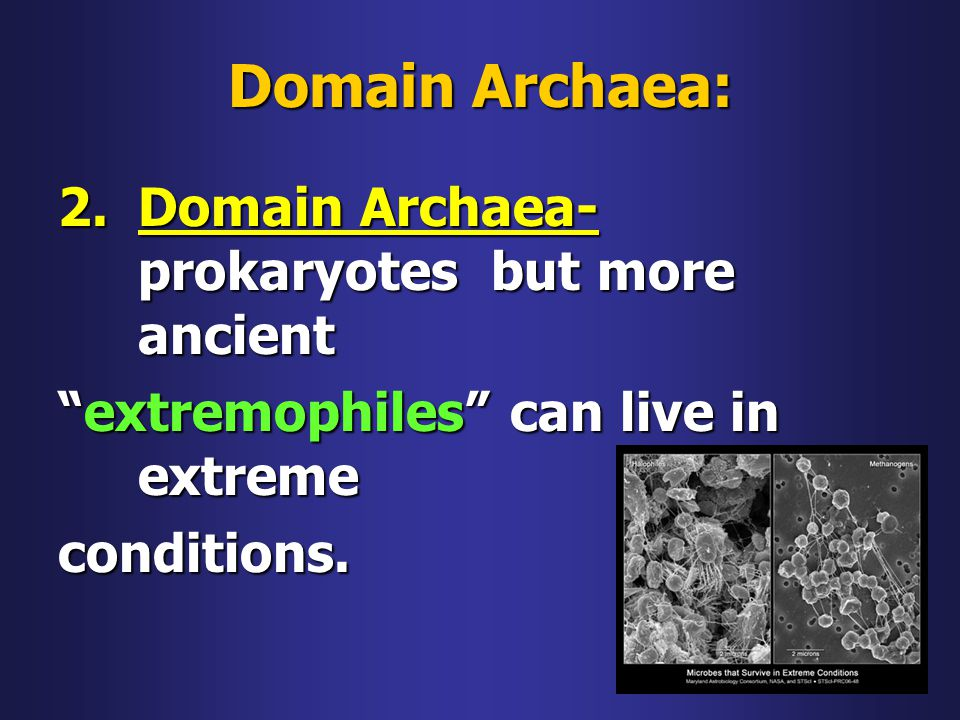 Domain Archaea: Domain Archaea-prokaryotes but more ancient