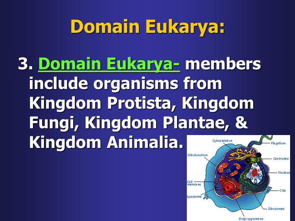 Domain Eukarya: 3.