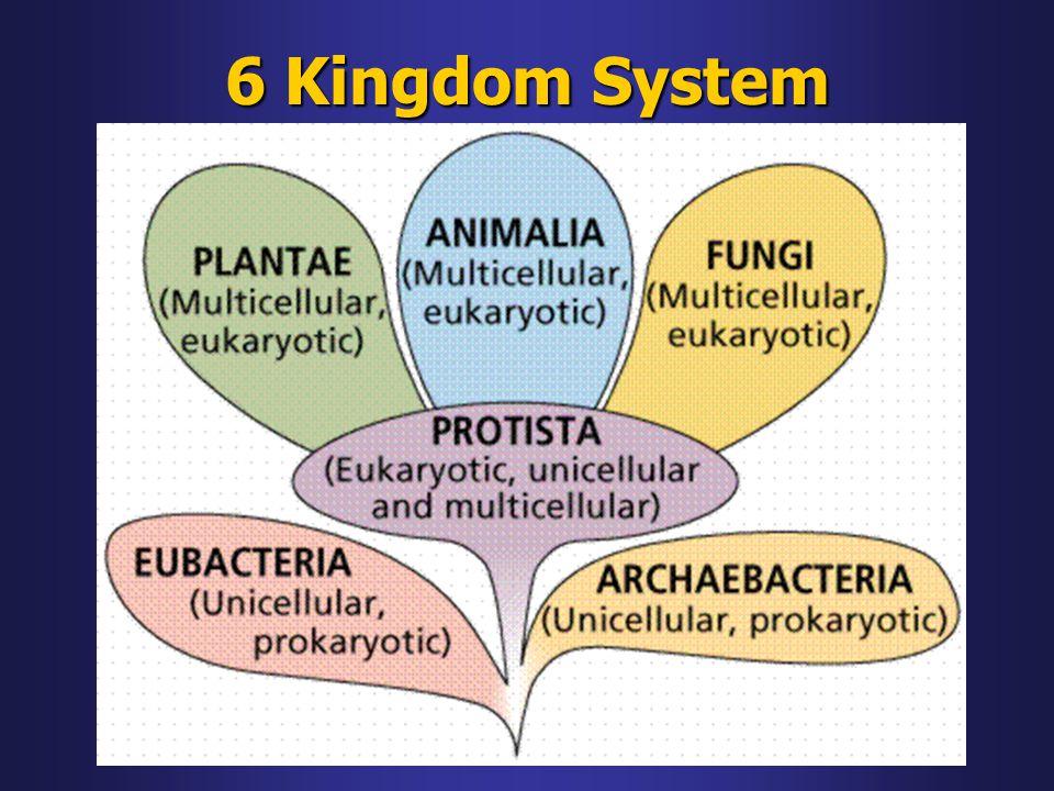 6 Kingdom System