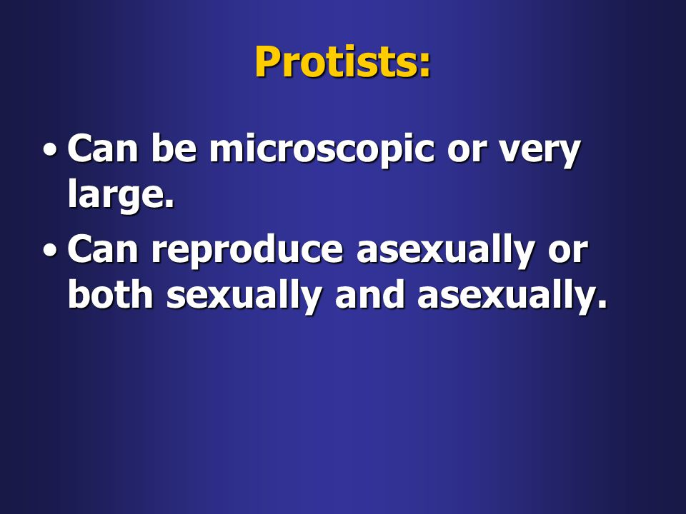 Protists: Can be microscopic or very large.