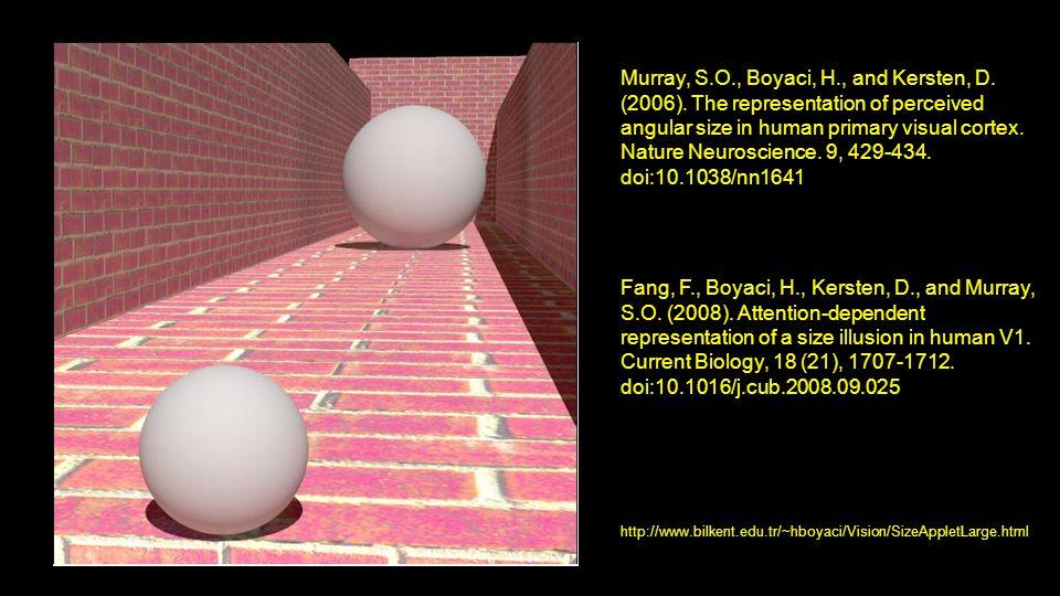 Murray, S. O. , Boyaci, H. , and Kersten, D. (2006)