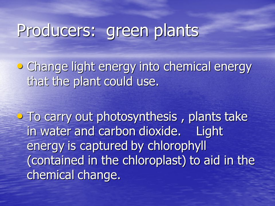 Producers: green plants
