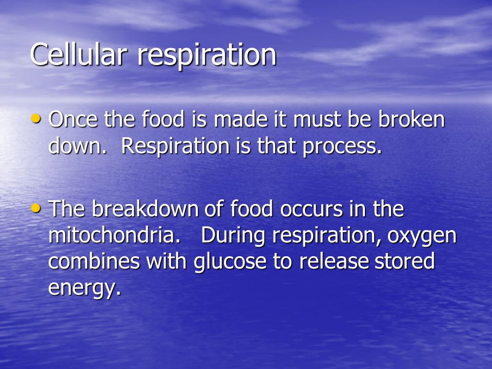 Cellular respiration Once the food is made it must be broken down. Respiration is that process.