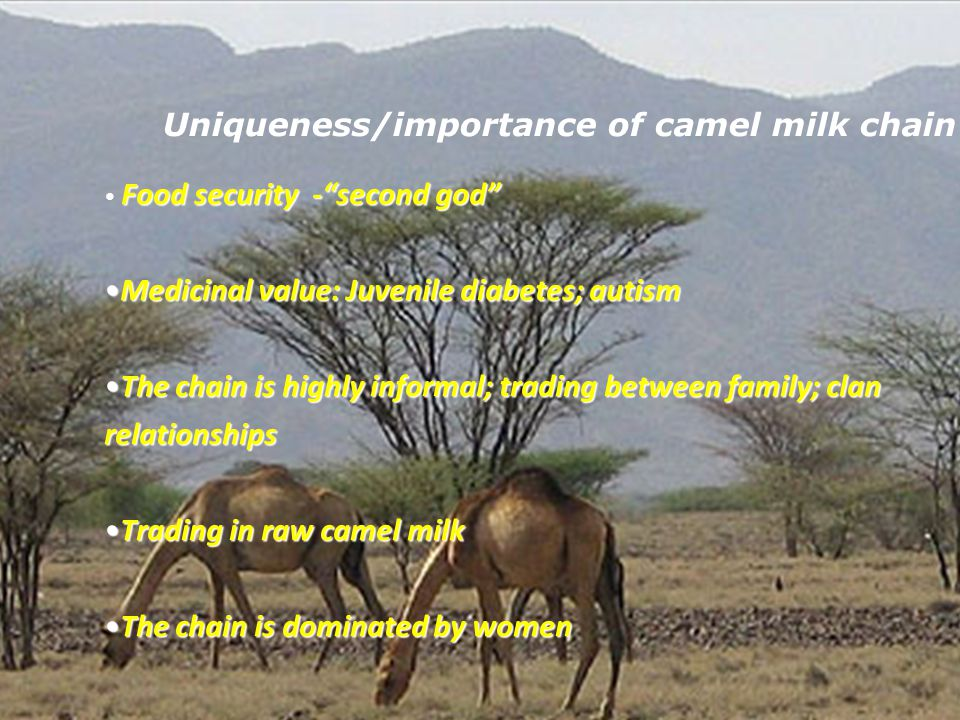 Uniqueness/importance of camel milk chain