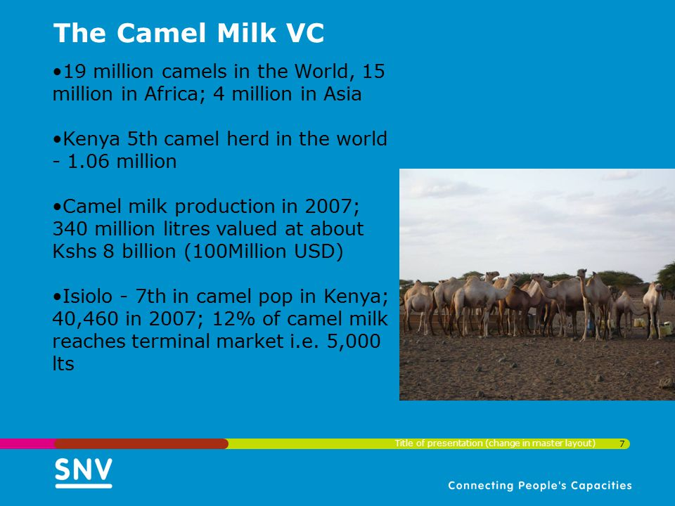 The Camel Milk VC 19 million camels in the World, 15 million in Africa; 4 million in Asia. Kenya 5th camel herd in the world - 1.06 million.