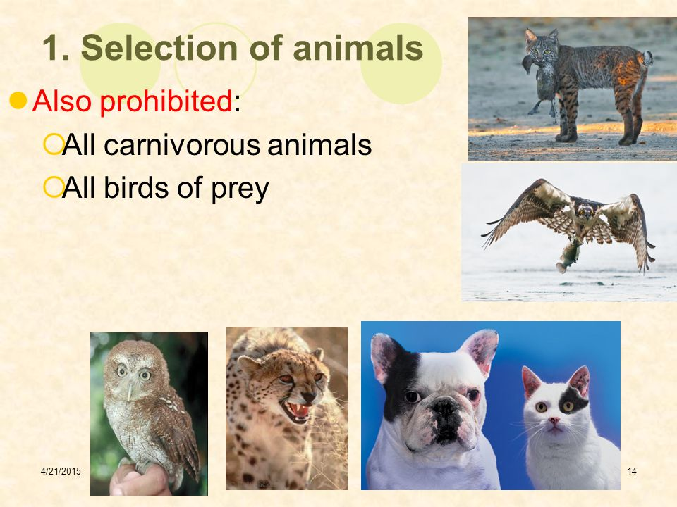 1. Selection of animals Also prohibited: All carnivorous animals