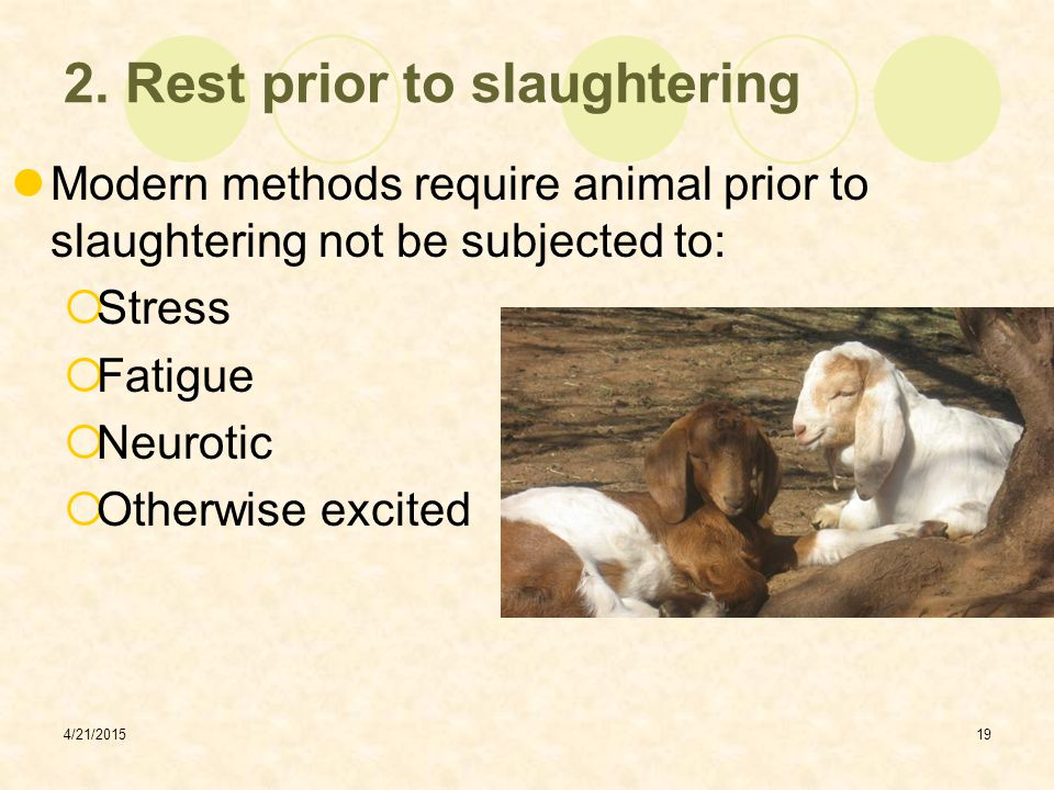 2. Rest prior to slaughtering