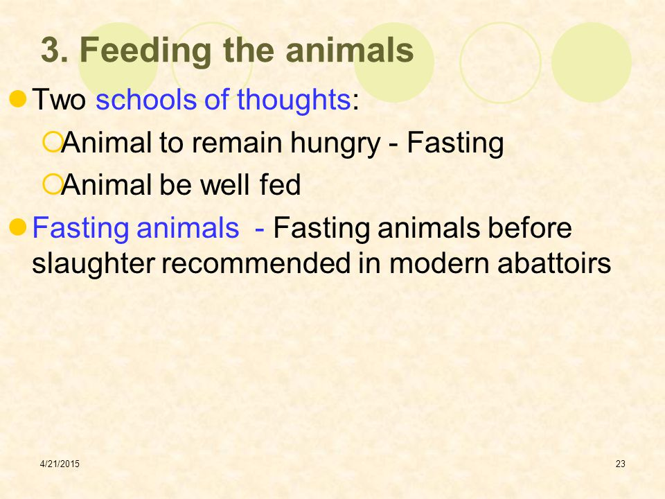 3. Feeding the animals Two schools of thoughts: