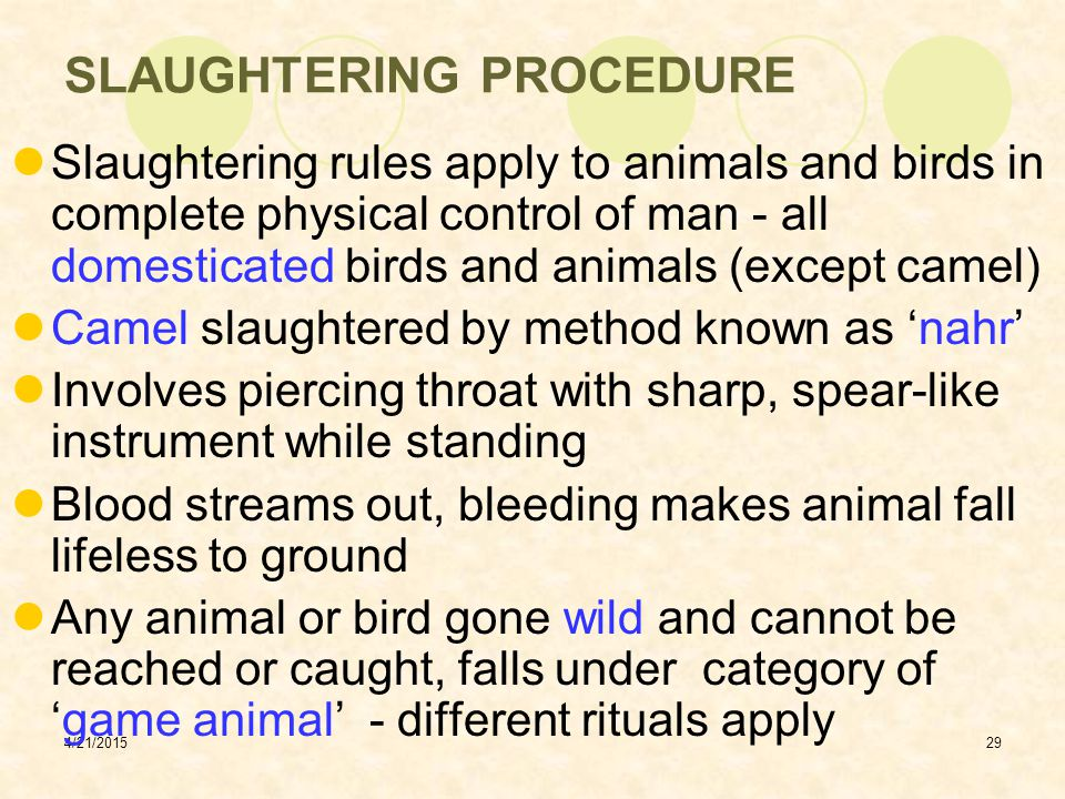 SLAUGHTERING PROCEDURE