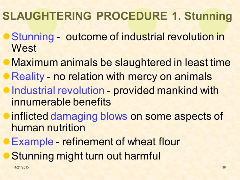 SLAUGHTERING PROCEDURE 1. Stunning