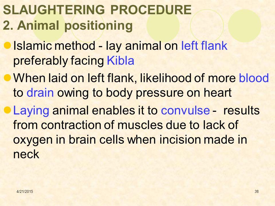 SLAUGHTERING PROCEDURE 2. Animal positioning