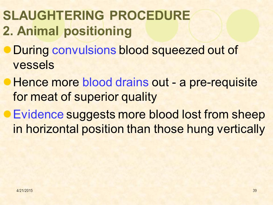 SLAUGHTERING PROCEDURE 2. Animal positioning