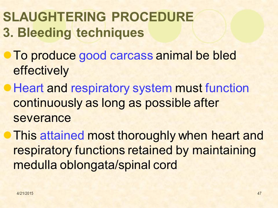 SLAUGHTERING PROCEDURE 3. Bleeding techniques