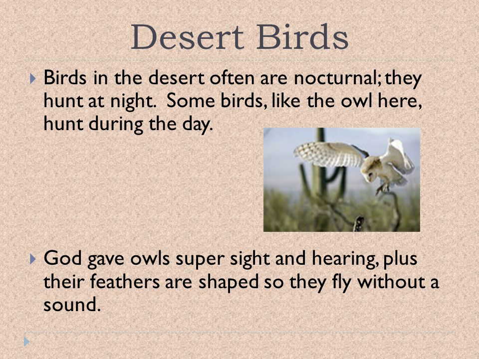 Desert Birds Birds in the desert often are nocturnal; they hunt at night. Some birds, like the owl here, hunt during the day.
