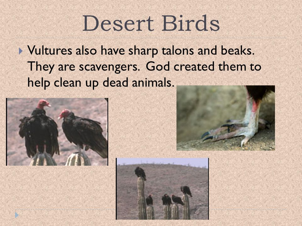 Desert Birds Vultures also have sharp talons and beaks.