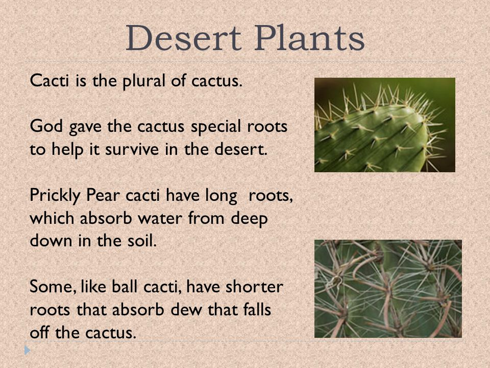 Desert Plants Cacti is the plural of cactus.
