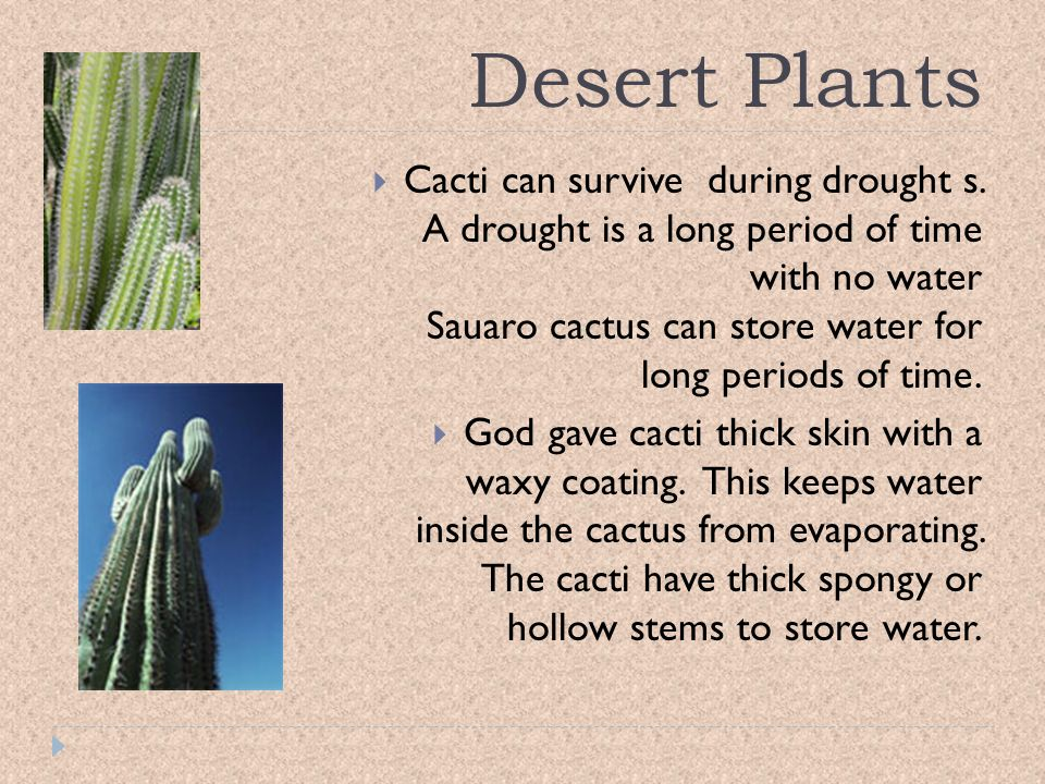 Desert Plants Animals In The Bible And Their Adaptations