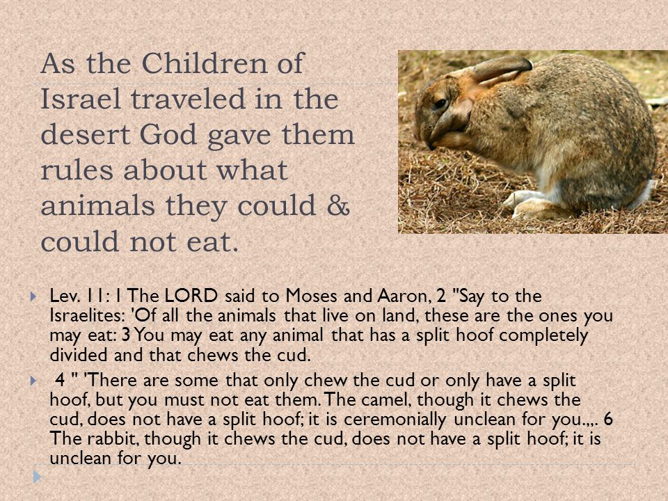 As the Children of Israel traveled in the desert God gave them rules about what animals they could & could not eat.