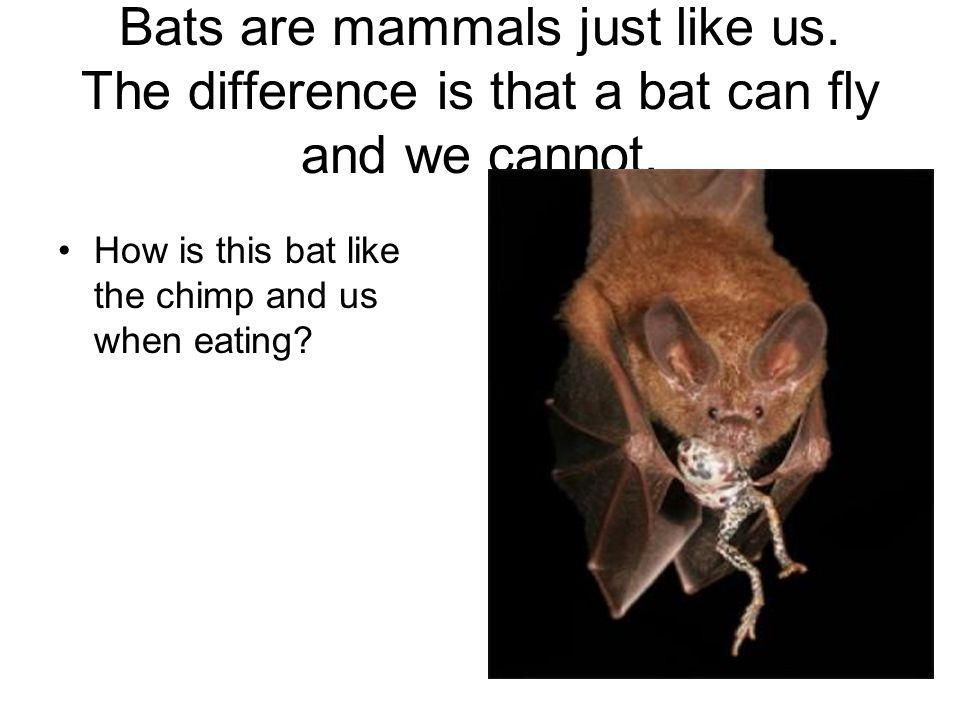Bats are mammals just like us
