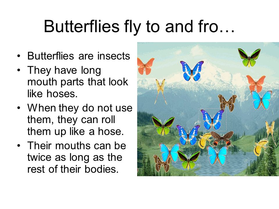 Butterflies fly to and fro…