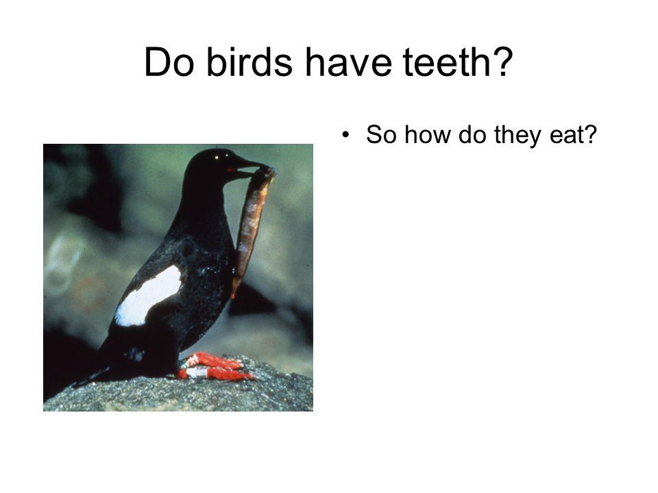 Do birds have teeth So how do they eat