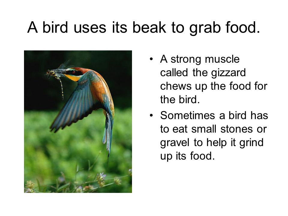 A bird uses its beak to grab food.