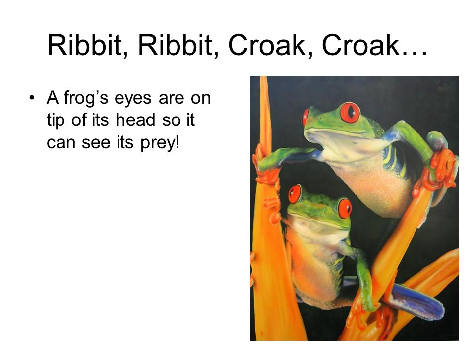 Ribbit, Ribbit, Croak, Croak…