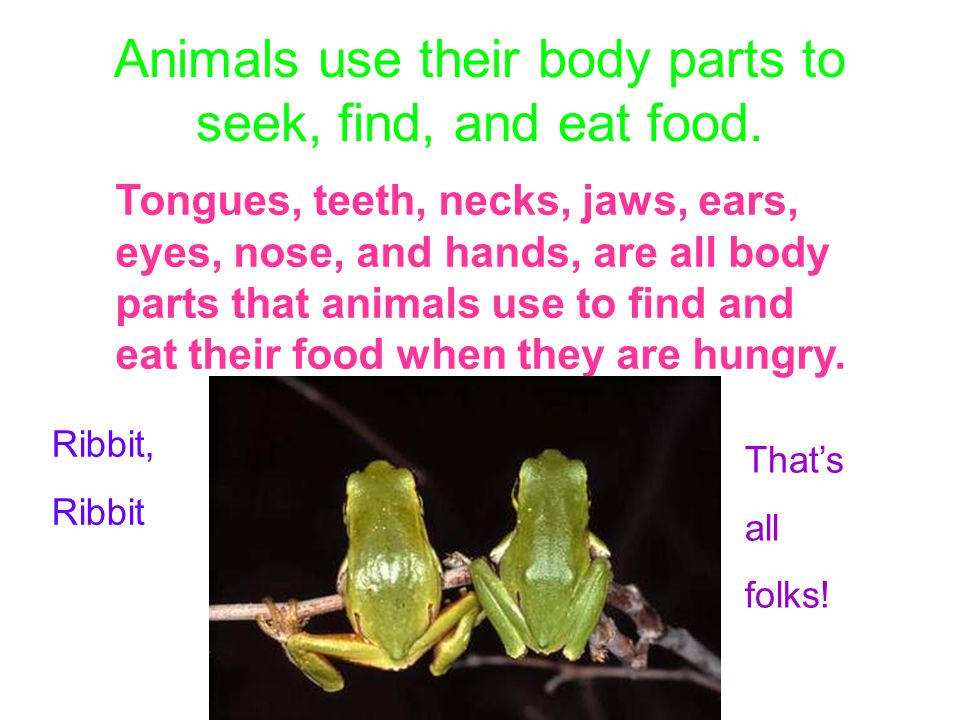 Animals use their body parts to seek, find, and eat food.