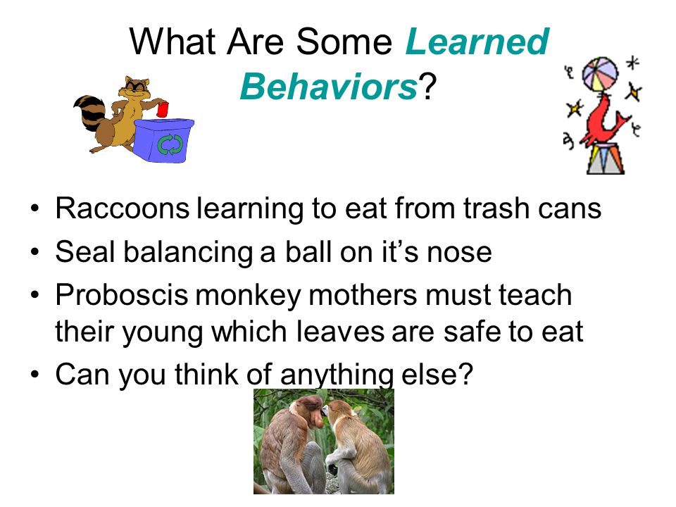 What Are Some Learned Behaviors