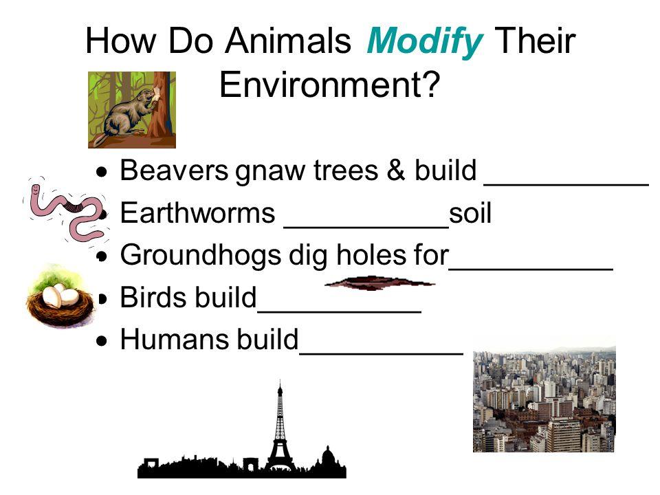 How Do Animals Modify Their Environment