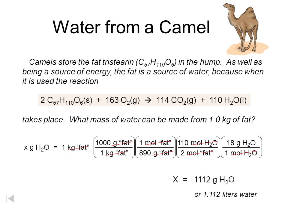 Water from a Camel Camels store the fat tristearin (C57H110O6) in the hump. As well as.
