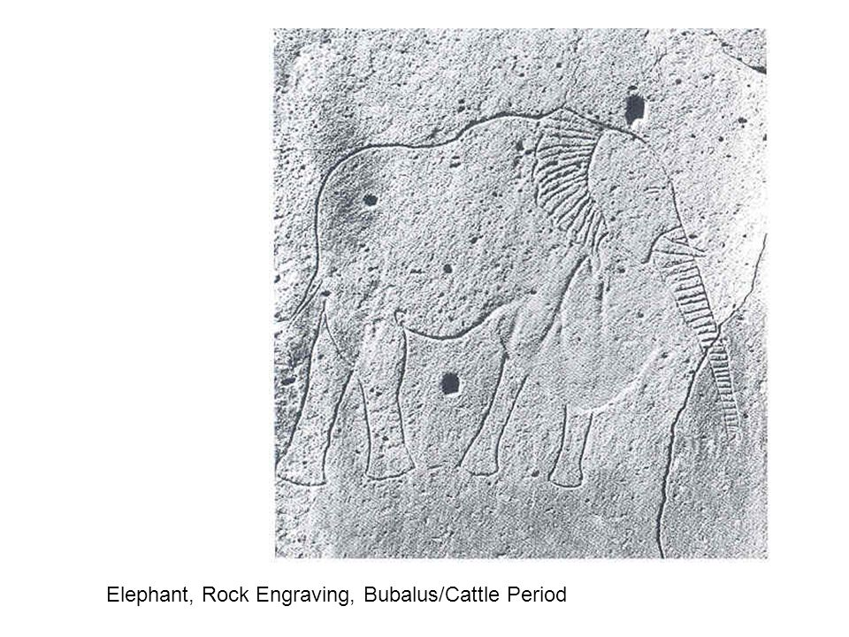 Elephant, Rock Engraving, Bubalus/Cattle Period
