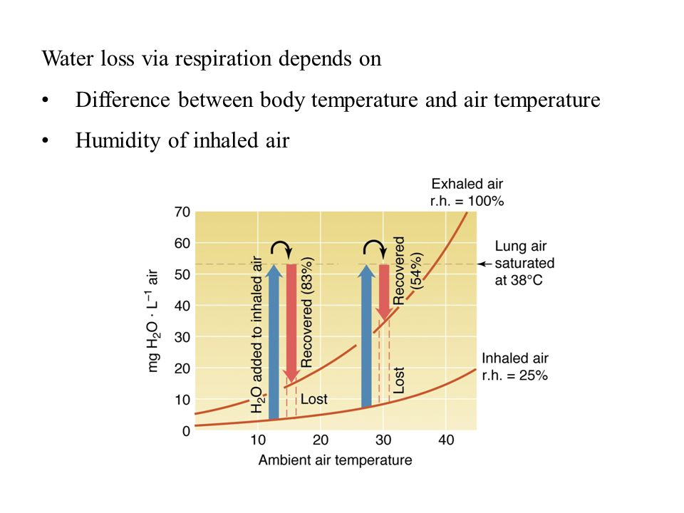 Water loss via respiration depends on