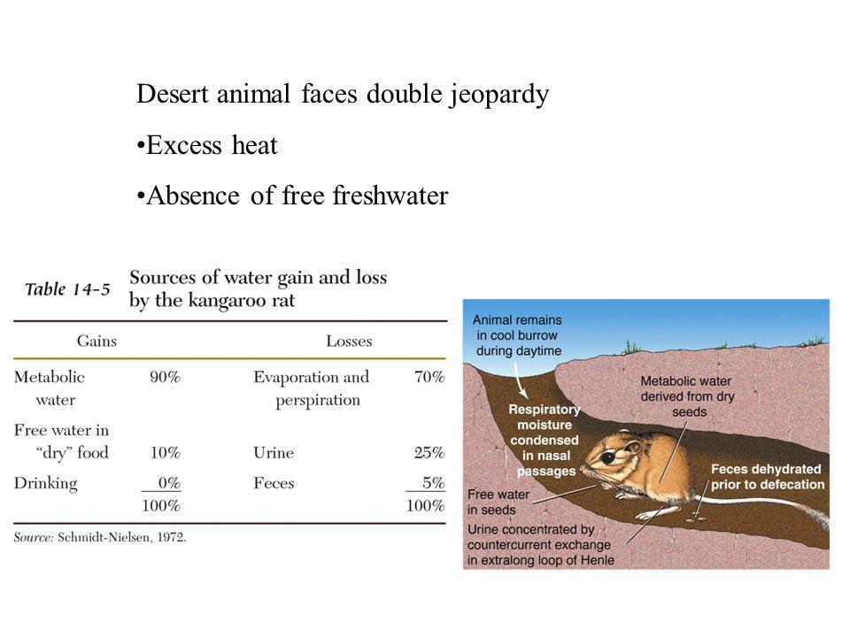 Desert animal faces double jeopardy