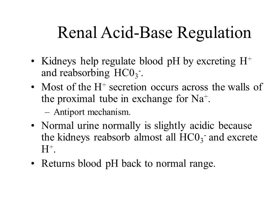 Renal Acid-Base Regulation