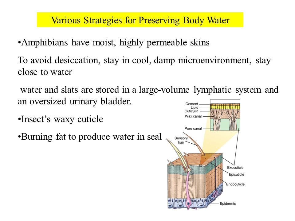 Various Strategies for Preserving Body Water