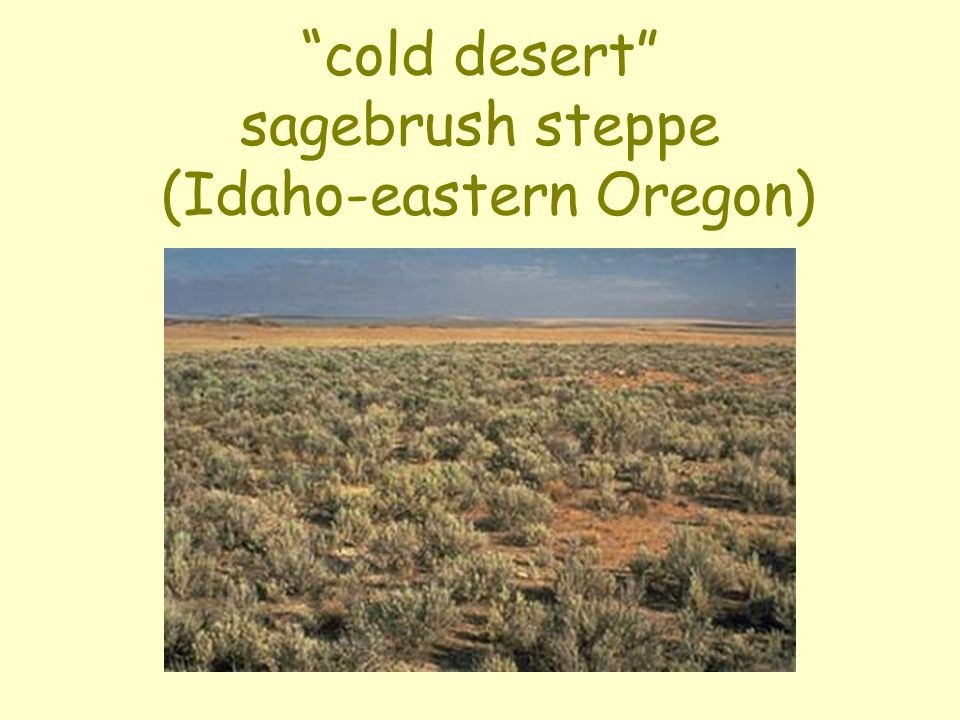 cold desert sagebrush steppe (Idaho-eastern Oregon)