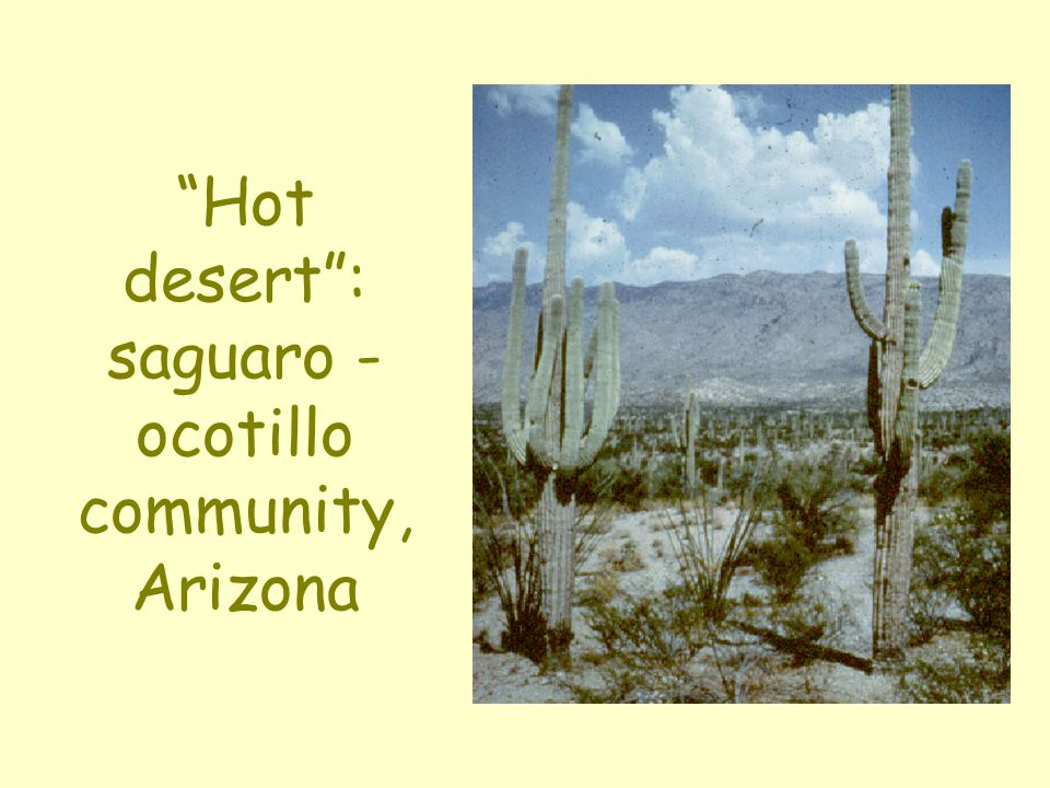 Hot desert : saguaro - ocotillo community, Arizona