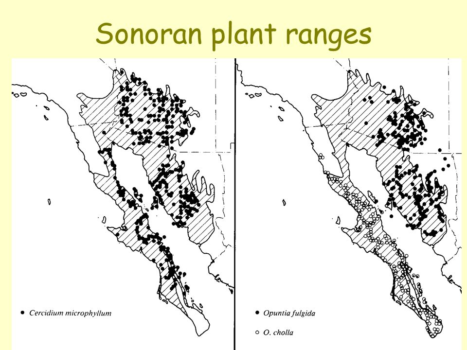 Sonoran plant ranges