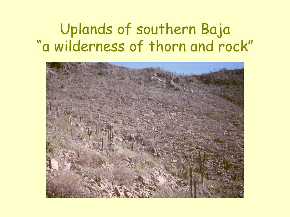 Uplands of southern Baja a wilderness of thorn and rock
