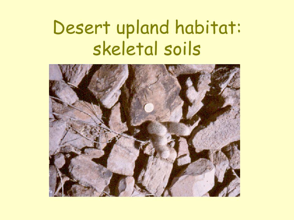 Desert upland habitat: skeletal soils