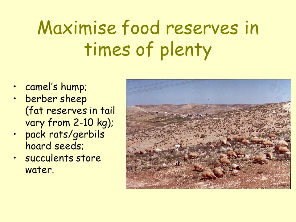 Maximise food reserves in times of plenty