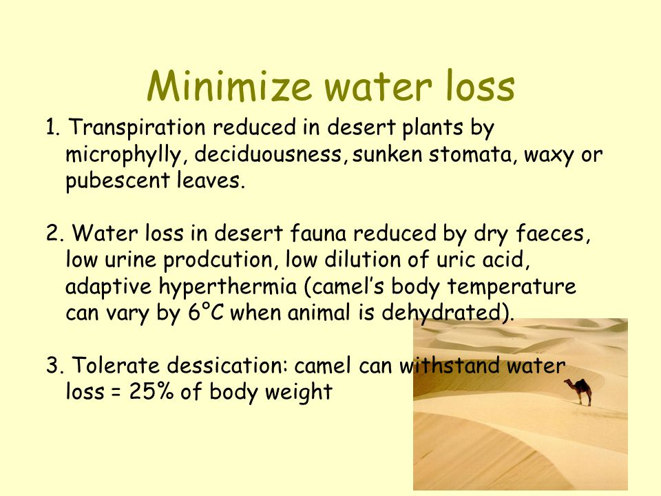 Minimize water loss 1. Transpiration reduced in desert plants by microphylly, deciduousness, sunken stomata, waxy or pubescent leaves.