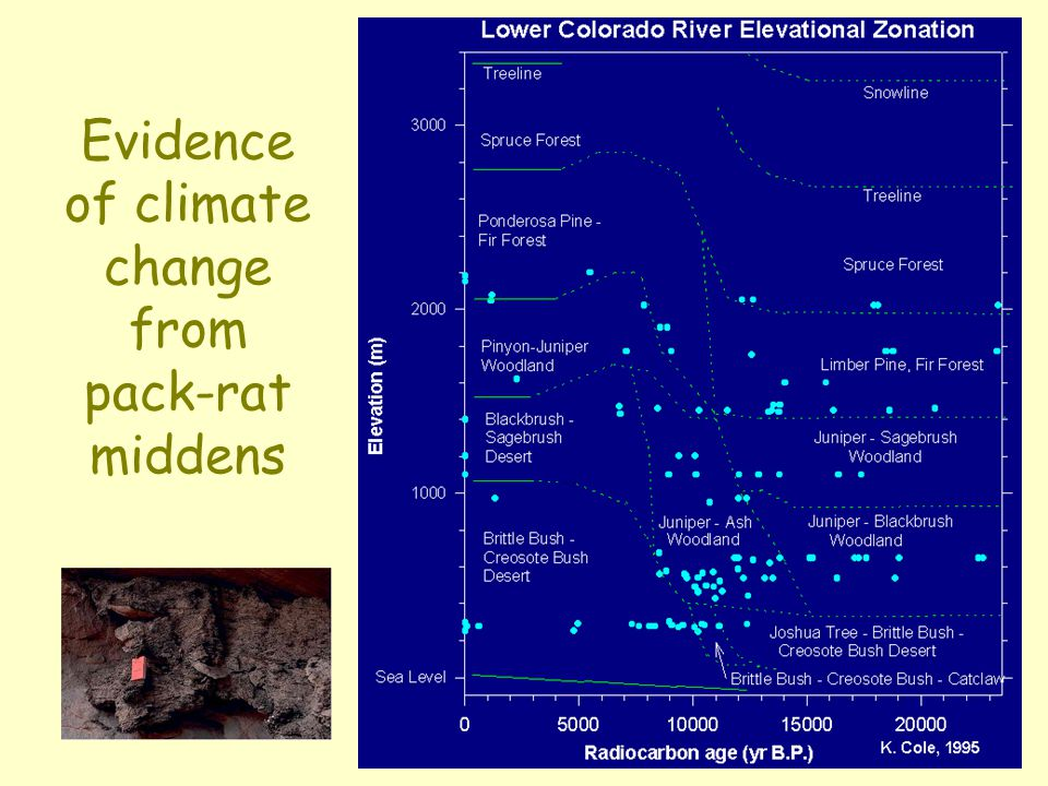 Evidence of climate change from pack-rat middens