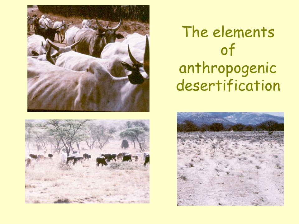 The elements of anthropogenic desertification
