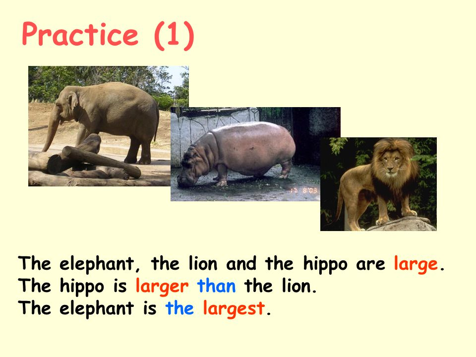 Practice (1) The elephant, the lion and the hippo are large.