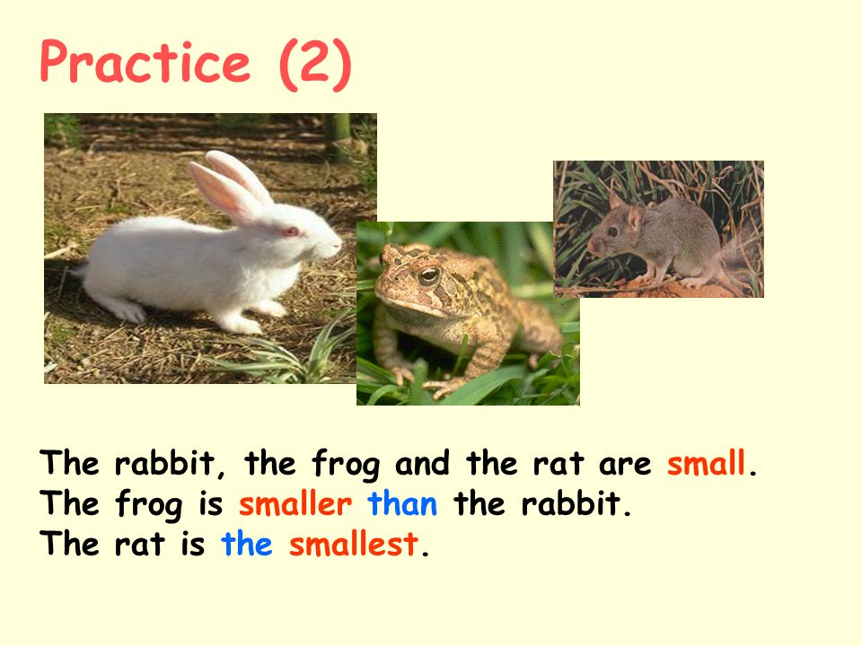 Practice (2) The rabbit, the frog and the rat are small.