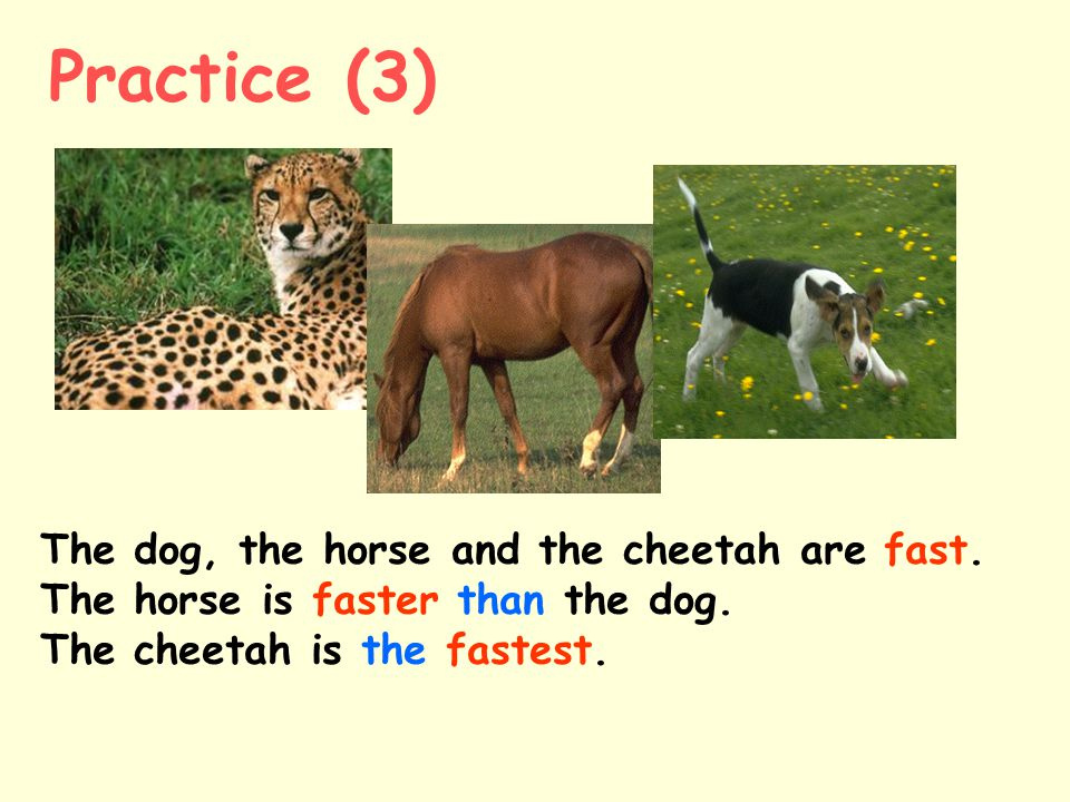 Practice (3) The dog, the horse and the cheetah are fast.