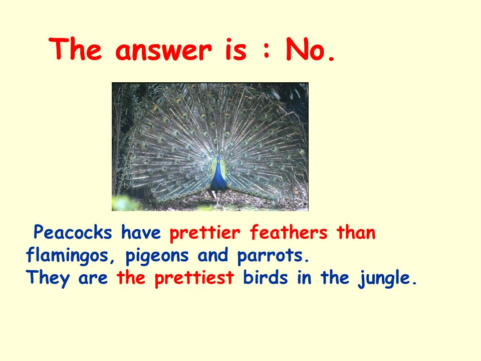 The answer is : No. Peacocks have prettier feathers than flamingos, pigeons and parrots.